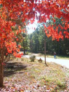 Fall at Alapine